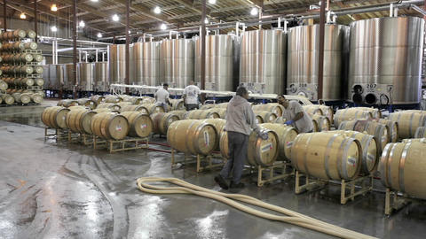 A cellar crew tops off wine barrels during harvest in California wine country Footage