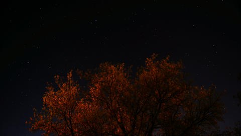 Time lapse of stars moving across the sky with a tree in... Stock Video Footage