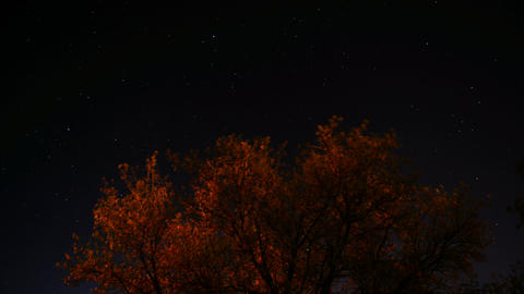 Time lapse of stars moving across the sky with a tree in the foreground Footage