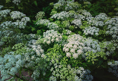 White & green summer plants background Photo