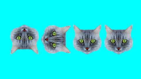 Cat style wiggle Animation