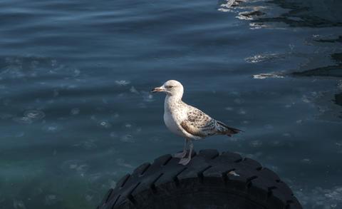Sea gull perched on a marine fender at the seaside Fotografía