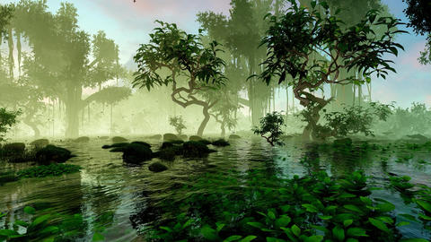 Mangrove swamp and plants Animation