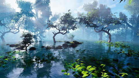Mangrove forest and sun Animation