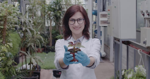 Middle shot of positive Caucasian woman showing pot with seedling at camera and Live Action