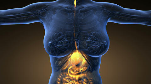 Loop science anatomy scan of human digestive system glowing with yellow on orang Animation