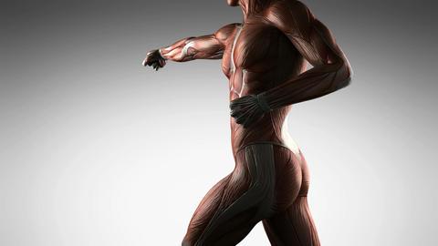 Human Muscle Anatomy Stock Video Footage