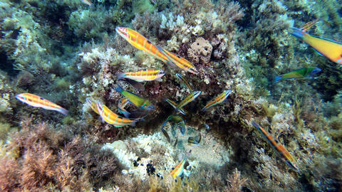 Colourful reef fishes - Underwater scene scuba diving in Majorca Live Action