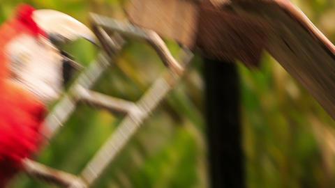 Closeup Man Hand Feeds Blue Red Parrots in KL Bird Park Footage