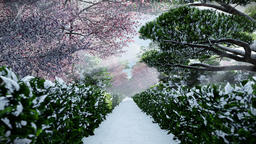 Japanese garden in winter, sun shining between trees Animation