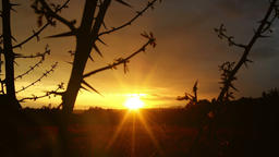 Magical timelapse sunset through thorn branches over countryside Footage