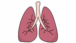 lungs medical sketch illustration hand drawn animation transparent Footage