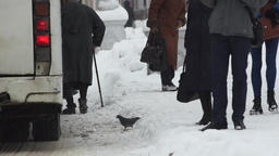 Public transportation and people at the bus stop in winter Footage