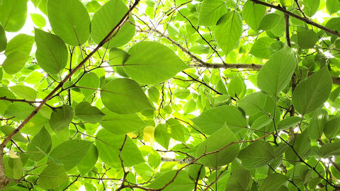 Green leaves foliage motion on bright sunbeams background,texture pattern 4k Live Action