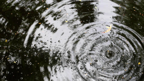 Falling water drops create large ripples on rippled water Live Action