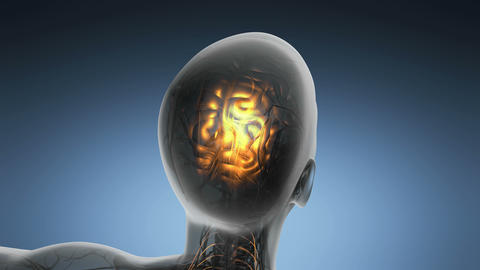 science anatomy scan of human brain glowing with yellow Animation