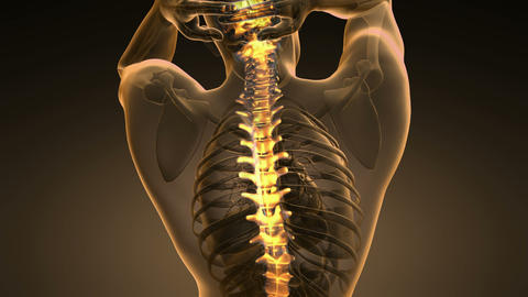 science anatomy scan of human spinal bones glowing with yellow 40 Animation
