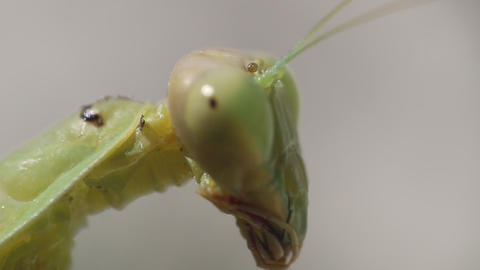 Insect video portrait. Ultra macro Live Action