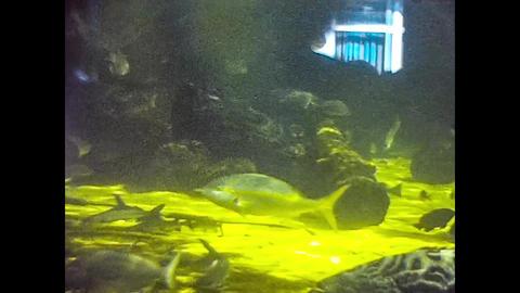 MIAMI 1980: Aquarium with exotic fish 2 Live Action