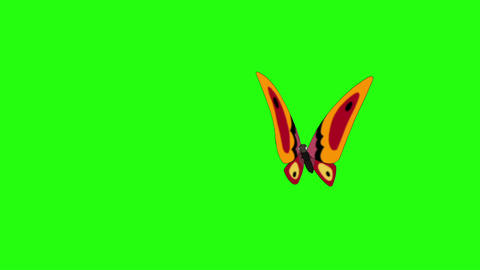 Orange butterfly flies in, sits and flies away chroma key CG動画