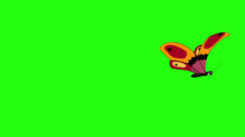 Orange butterfly flies away and returns chroma key looped Animation