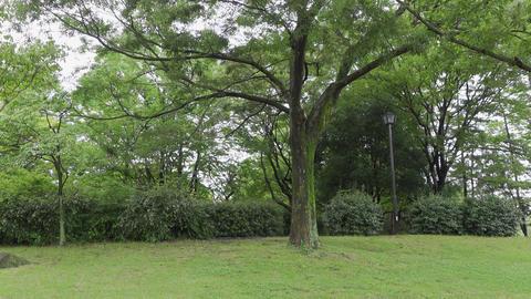 Rainy season sarue park019 Live Action