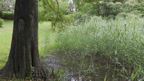 Rainy season sarue park022 Live Action