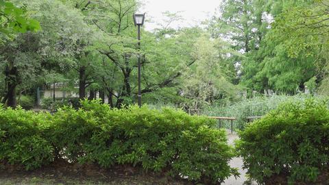 Rainy season sarue park080 Live Action