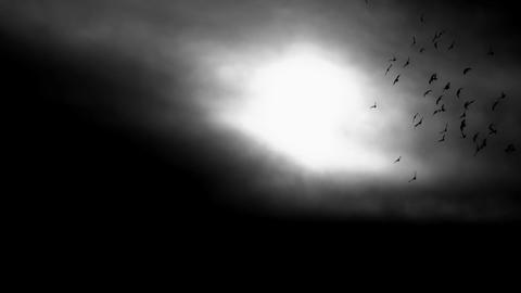 Birds Flying In The Dark Mysterious Sky Footage