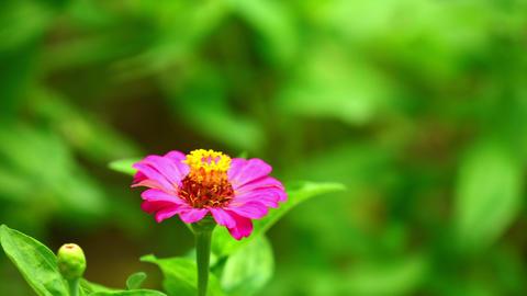 Pink Flower Sunlit Intimate Garden Scenery Live Action