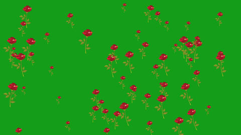 Falling red rose flowers motion graphics with green screen background CG動画