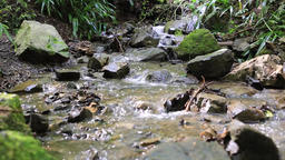 Water stream at mount Takao, Tokyo, Japan Footage