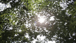 Sunlight filtering through green leaves in a park, Tokyo, Japan Footage