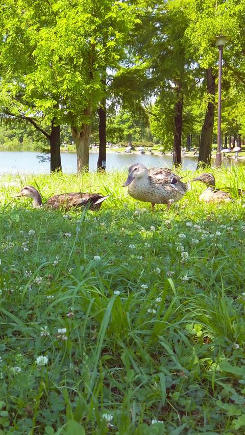 Pond duck_portrait Live Action