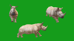 Running rhino motion graphics with green screen background Animation