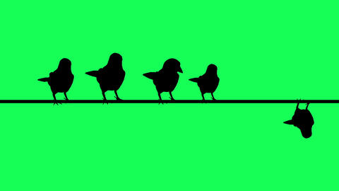 animation of sparrows Silhouette Sit On Wires - Green Screen Animation