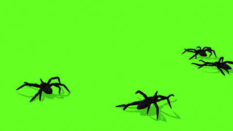 Animation Of Spiders On Green Screen Creepy CrawlingSpiders 2 Animation