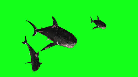 Sharks Swimming In A Circle Green Screen Front - 3D Rendering Animations Animation