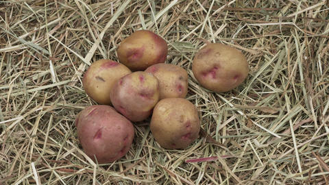 Organic potatoes on a wooden background Live Action