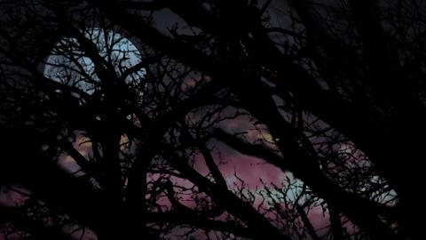 Horror Background. Disturbing Background For Your Horror Thriller Animation