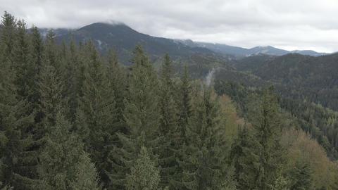 Ukraine, Carpathian Mountains: Beautiful mountain forest landscape. Aerial, flat Live Action