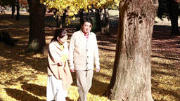 Japanese mature couple relaxing in a city park in Autumn Footage