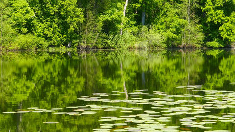 summer lake in forest landscape, zoom in Footage