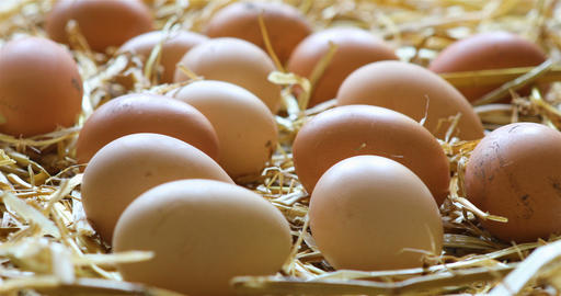 Organic chicken eggs in the hay Live Action