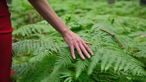 Female hand, with long graceful fingers gently touches the plant, leaves of fern Live Action