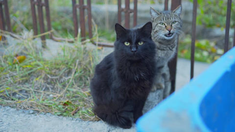 Two cats are looking at the camera, a black and striped gray cat is sitting Live Action
