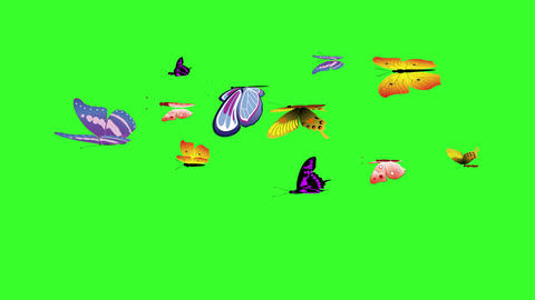 Animated colorful beauty butterfly on green screen chroma key Animation