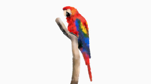 Macaw Colored Sketch GIF