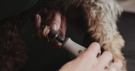 Trimming and polishing dog claws Live Action