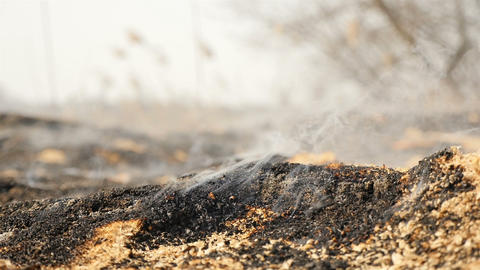 The peat field is on fire. Close-up. Burnt Earth. Ecological catastrophy Live Action